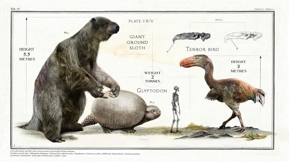 Мегатерий, глиптодон и птица семейства фороракосовые