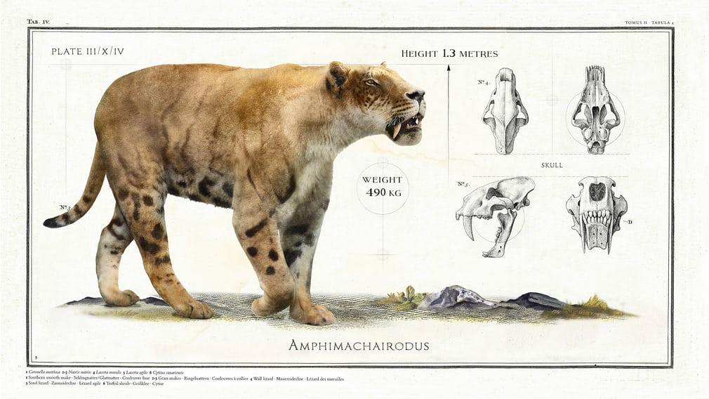 Amphimachairodus - вымерший род саблезубых кошек