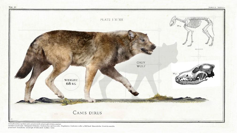 Ужасный волк (Canis dirus)