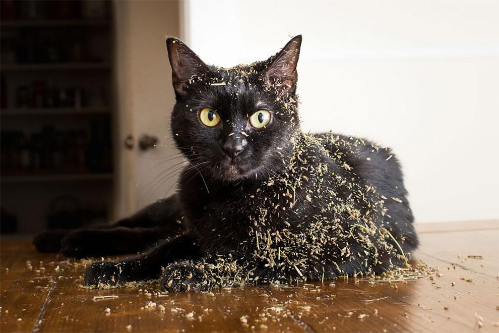 Реакция котов на кошачью мяту в забавном фотопроекте Эндрю Марттилы
