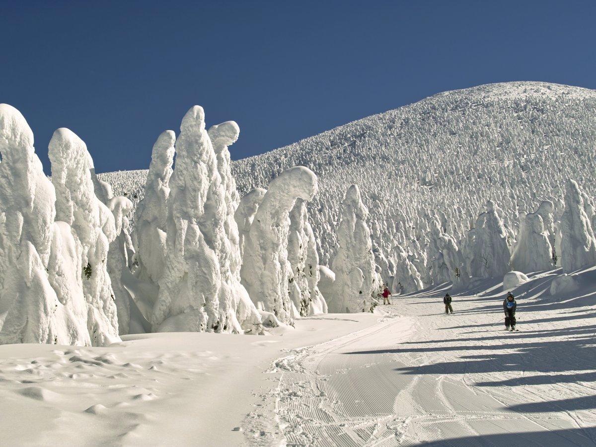 Замороженные деревья в Зао Онсен, Япония