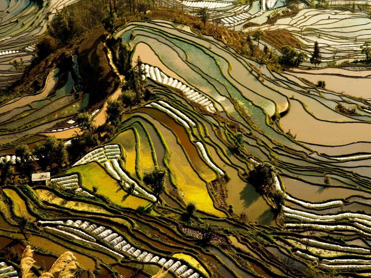 Рисовые террасы в провинции Юньнань, Китай