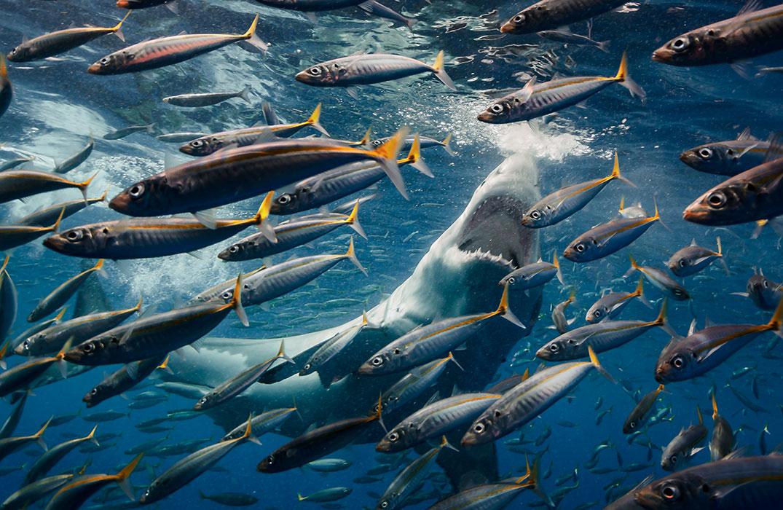 Победитель в категории«дикая природа» конкурса «Охрана природы 2018». ФотографRoberto Moccini Formiga, Бразилия