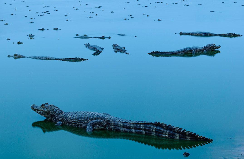Победитель в категории«вода» конкурса «Охрана природы 2018». ФотографJorge André Diehl, Бразилия
