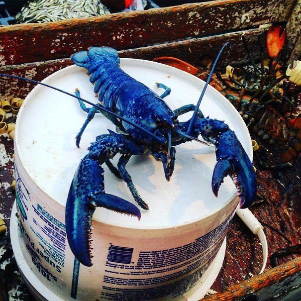 «Отец моего друга поймал синего омара. Вероятность такого улова составляет 1 к 2 миллионам»
