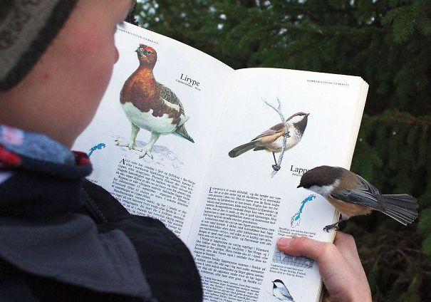 Птица, севшая на страницу описания своего вида