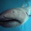 10 удивительных видов акул, о которых мы почти ничего не слышали