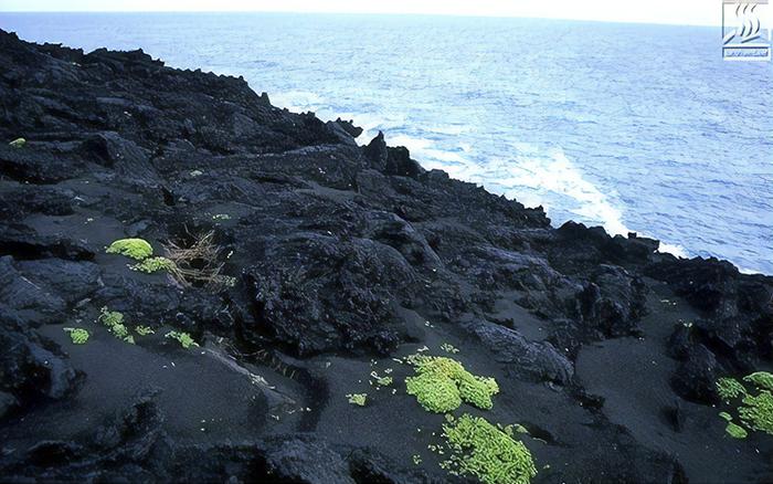 Растительность на острове Сюртсей