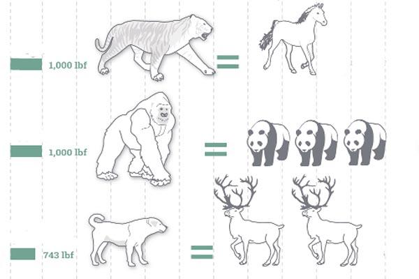 Чему равна сила укуса у различных видов животных (инфографика)