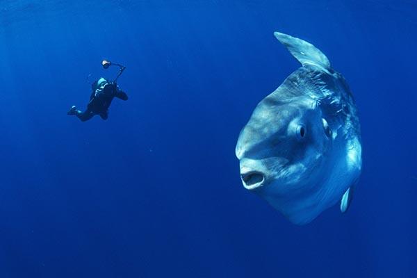 15 глубоководных монстров, населяющих Мировой океан