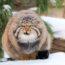10 редких видов животных, встречающихся на территории России