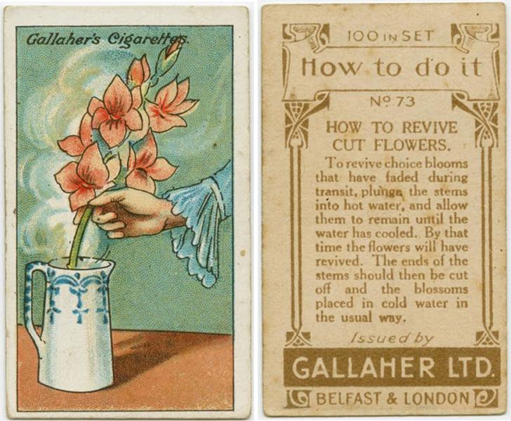 Как оживить срезанные цветы