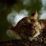 Победители конкурса фотографии дикой природы «WPY 2018»