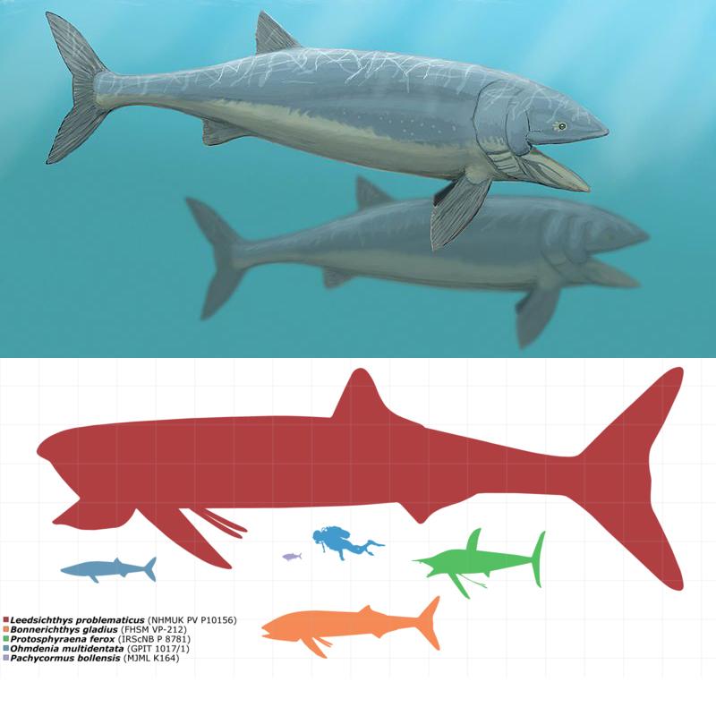 Лидсихтис (Leedsichthys)