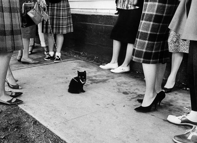 Винтажные фотографии чёрных котов с кастинга в Голливуде