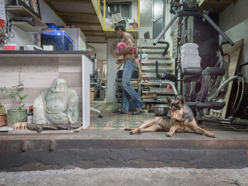 Обаятельные собаки-охранники в мастерских Гонконга