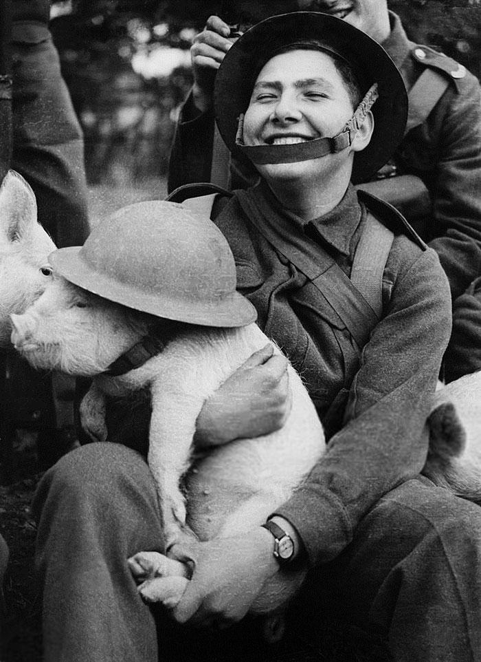 Молодой солдат держит маленького поросёнка, 1940-е годы