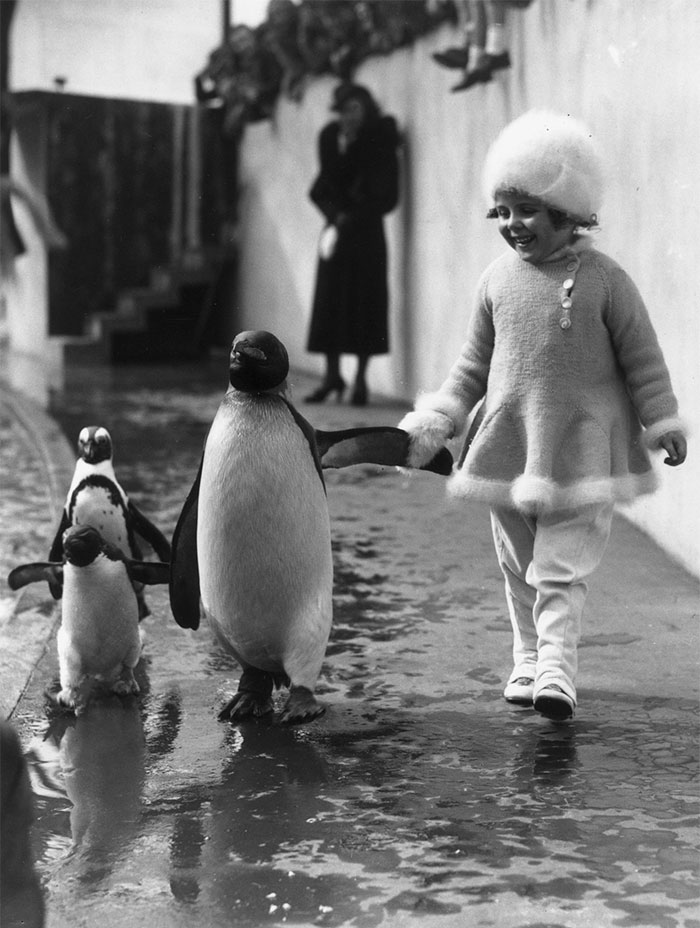 Девочка гуляет с пингвинами в Лондонском зоопарке, 1937 год