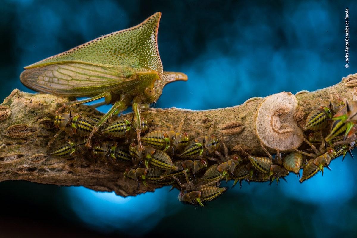Победитель в номинации «Портфолио фотографа дикой природы». Фотограф Javier Aznar González de Rueda
