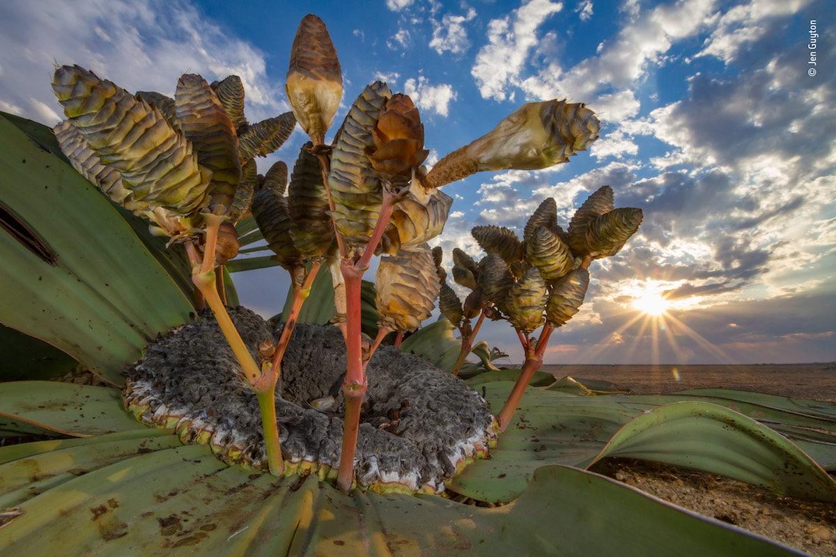 Победитель в номинации «Растения и грибы». Фотограф Jen Guyton