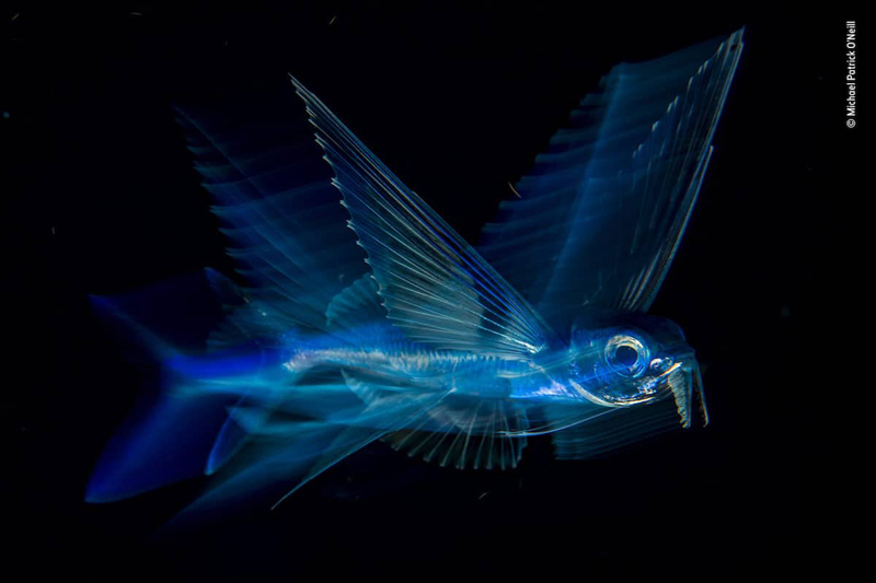 Победитель в номинации «Под водой». Фотограф Michael Patrick O'Neill