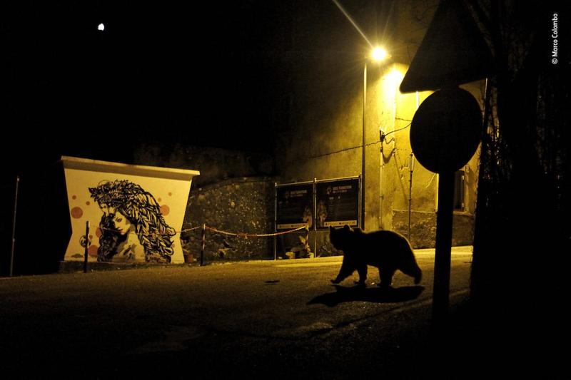 Победитель в номинации «Дикая природа в городской среде». Фотограф Marco Colombo