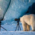 Победители конкурса юмористической фотографии дикой природы CWPA 2018