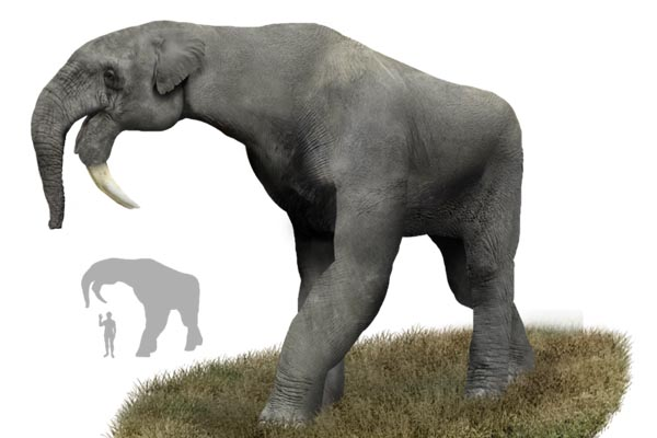 Мир после динозавров: 10 видов животных, существовавших до появления человека