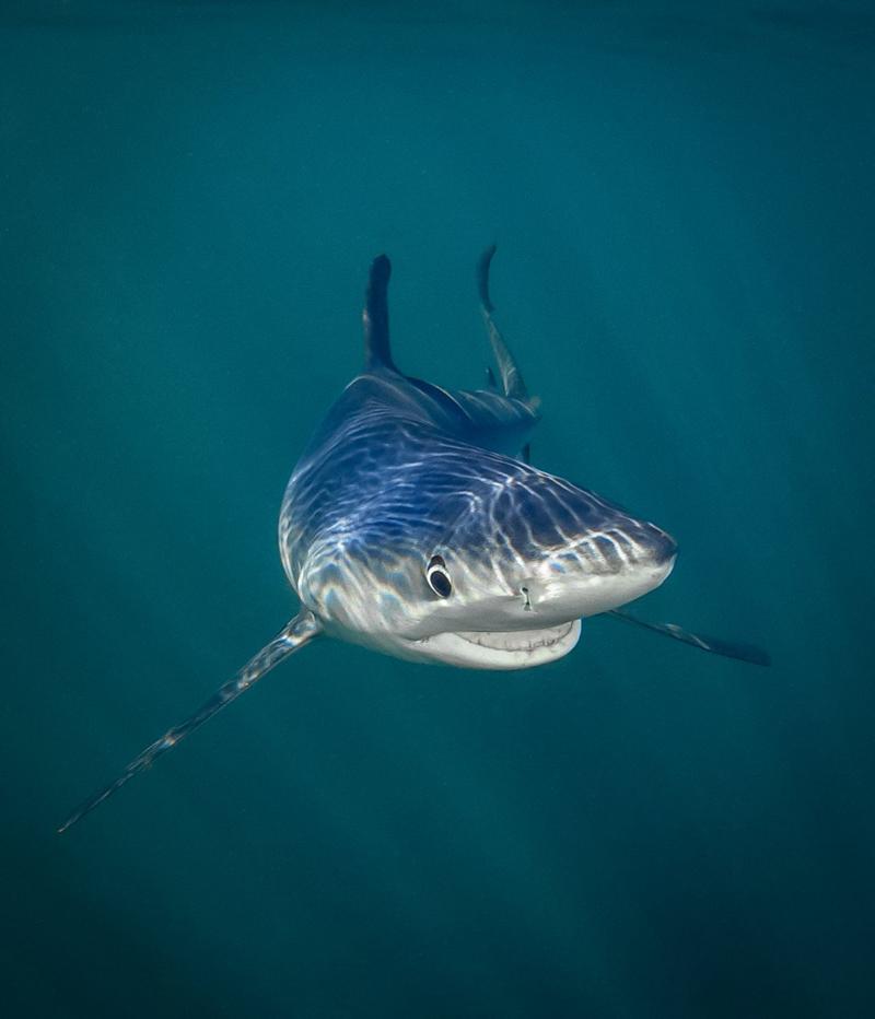 Победитель в категории «Под водой»: фотограф Tanya Houppermans