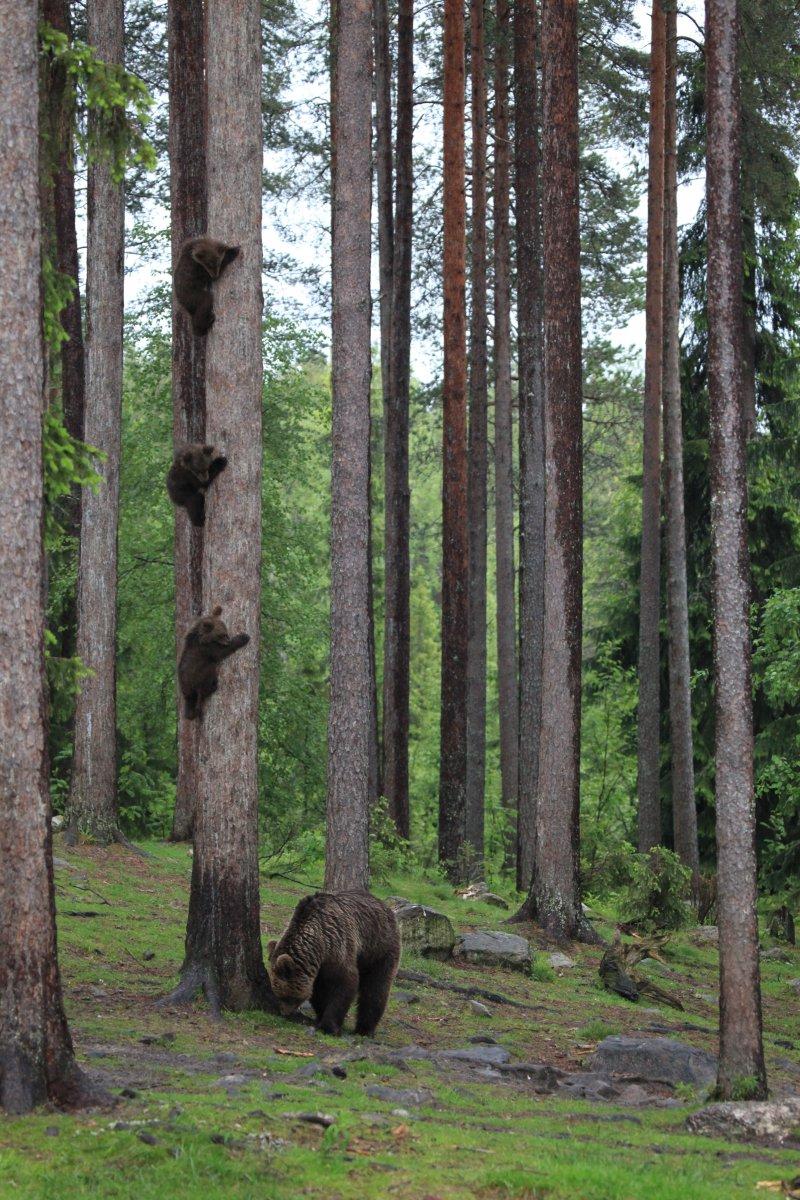 Победитель в категории «Интернет-портфолио»: фотограф Valtteri Mulkahainen