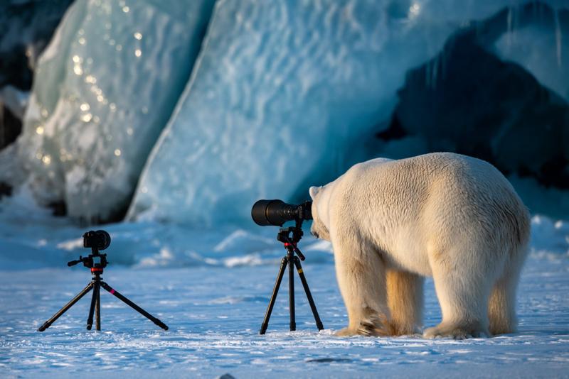 Высокая оценка: фотограф Roie Galitz