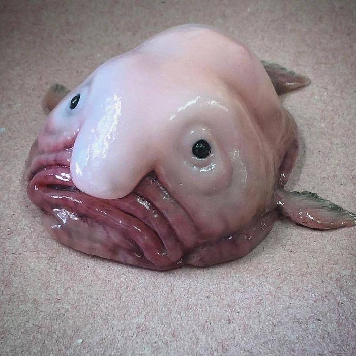 Жуткие морские существа в фотографиях российского рыбака Романа Федорцова