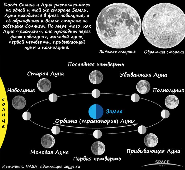 Фазы Луны: познавательное пособие для детей и взрослых (инфографика)
