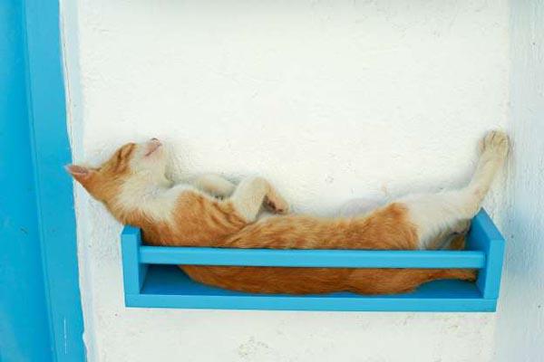 Беззаботная жизнь уличных котов со всего мира