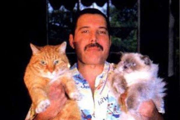 Очаровательные фотографии Фредди Меркьюри с его любимыми кошками