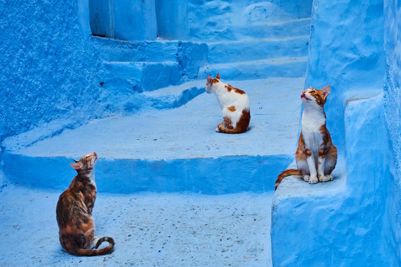 Шавен, Марокко