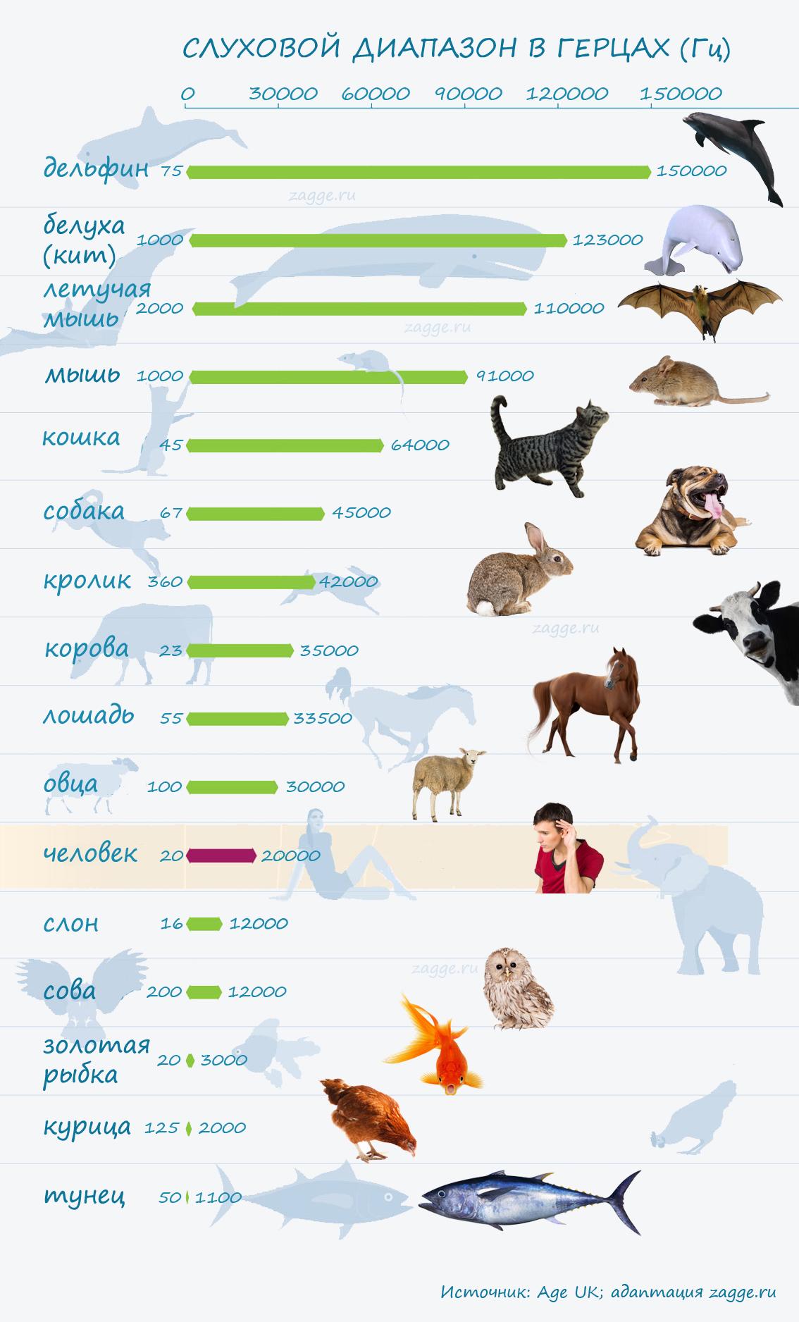 Слуховой диапазон у различных видов животных (инфографика)