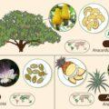 Популярные продукты питания и растения, из которых они произрастают (инфографика)