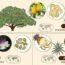 Продукты питания и растения, из которых они произрастают (инфографика)