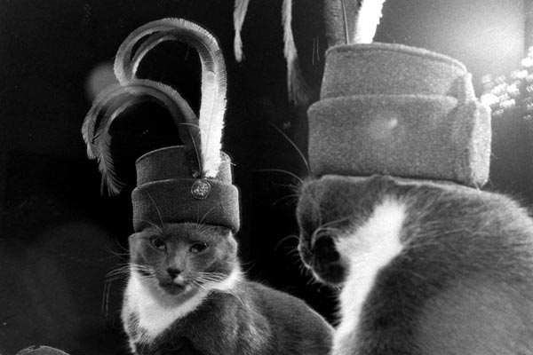 Всегда в центре внимания: старинные фотографии кошек до появления интернета