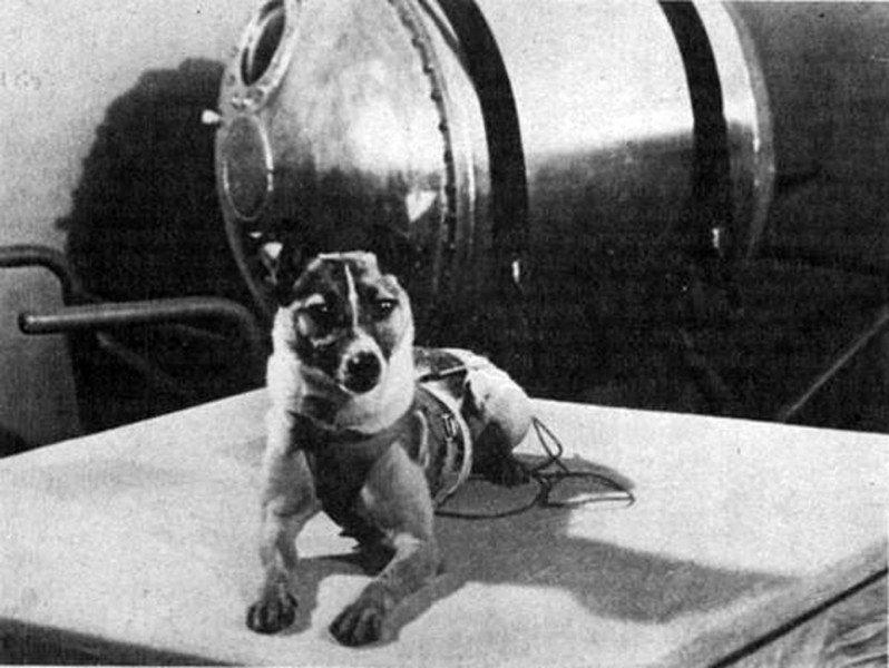 История Лайки - первого животного, выведенного на орбиту Земли