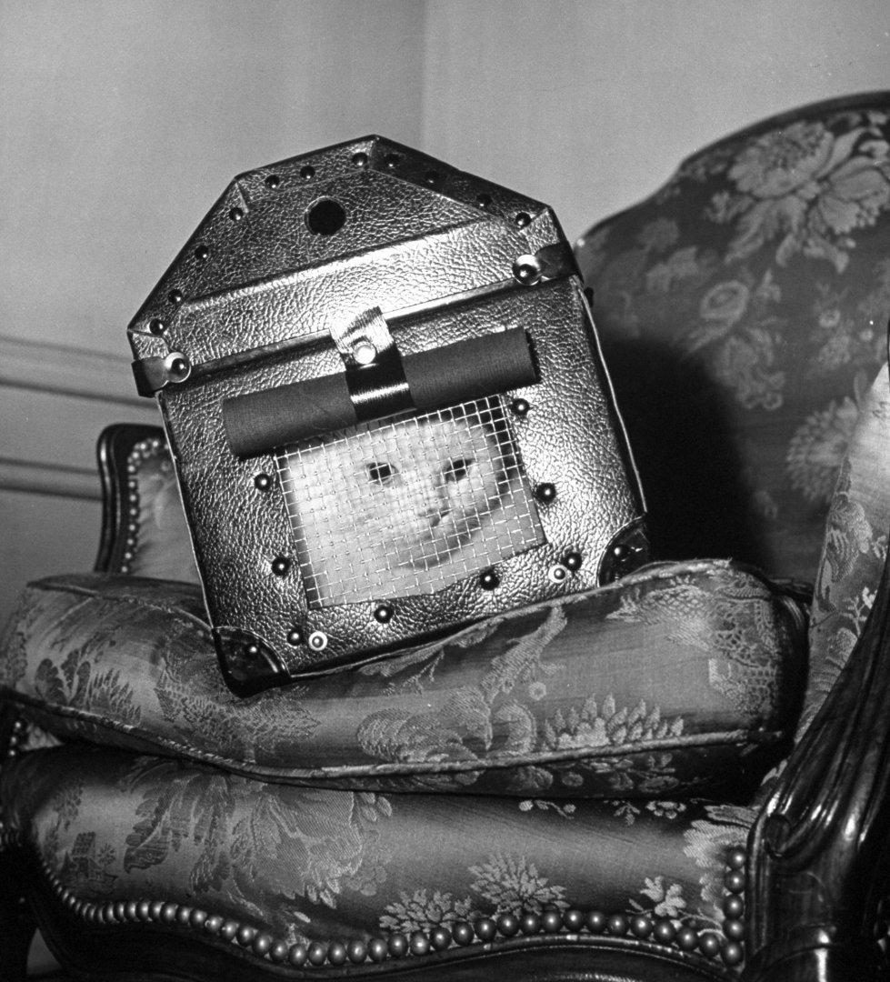 Кошка в защитной переноске во время воздушного налета, 1941 год