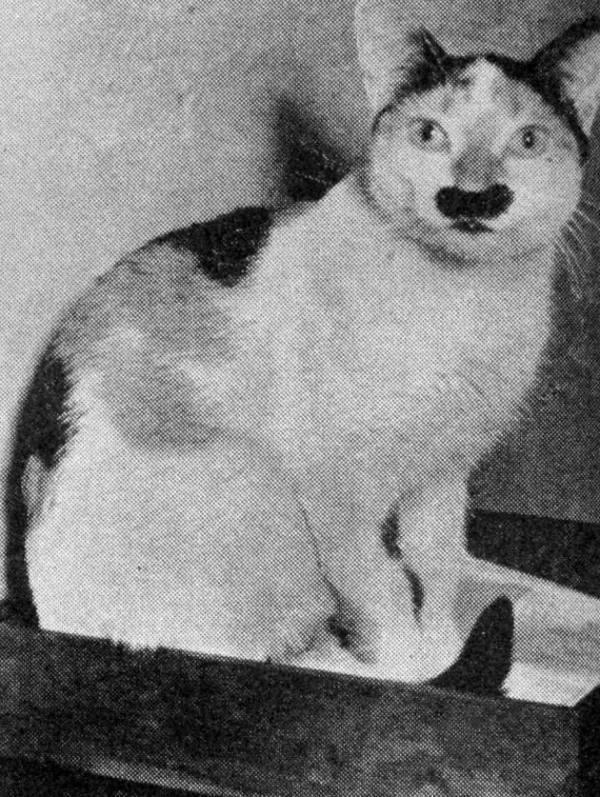 «Кошка-Гитлер» Ева (Eva)
