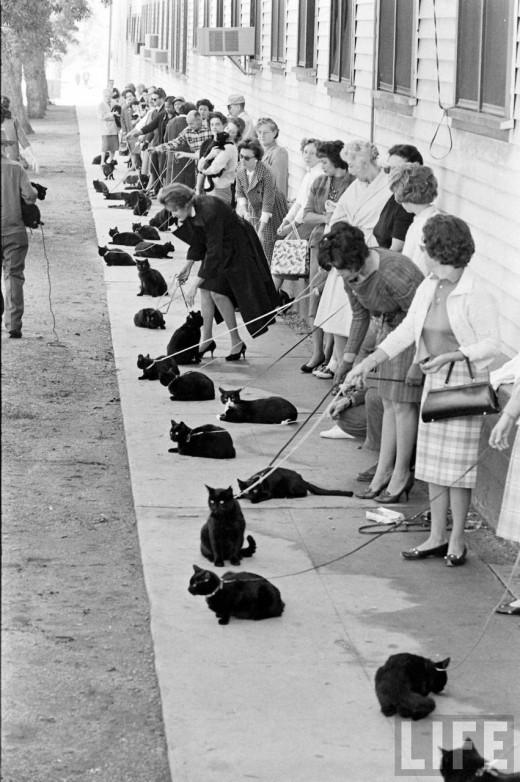 Очередь на прослушивание чёрных кошек на роль в фильме «Истории ужасов», 1961 год