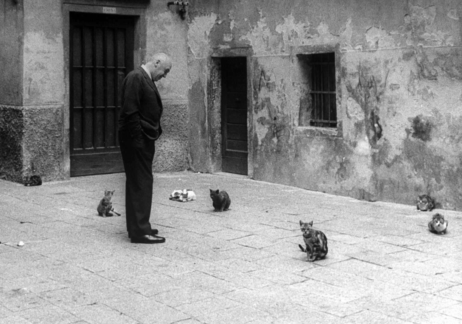 Отто Премингер смотрит на бродячих кошек на улице в Венеции во время участия в Венецианском кинофестивале, на котором был показан его фильм «Анатомия убийства»