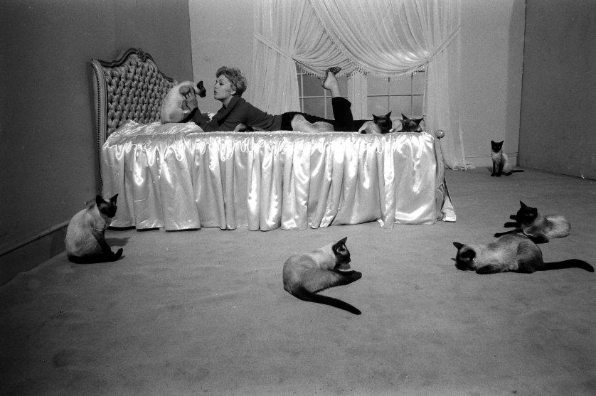 Ким Новак играет с кошками, которые снимались в фильме «Колокол, книга и свеча», 1958 год