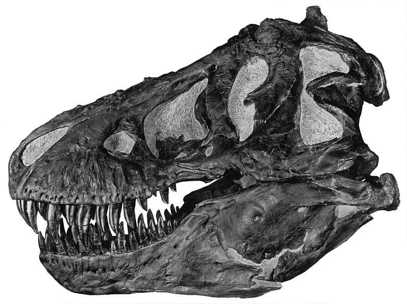 20 фактов о самом грозном хищнике на Земле - тираннозавре