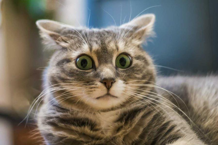 Кошки знают свои имена, просто иногда они предпочитают не реагировать на это бурно