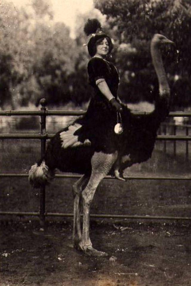 3. Развлечение на страусиной ферме