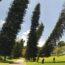 Удивительная сосна Кука: дерево, которое всегда наклоняется к экватору